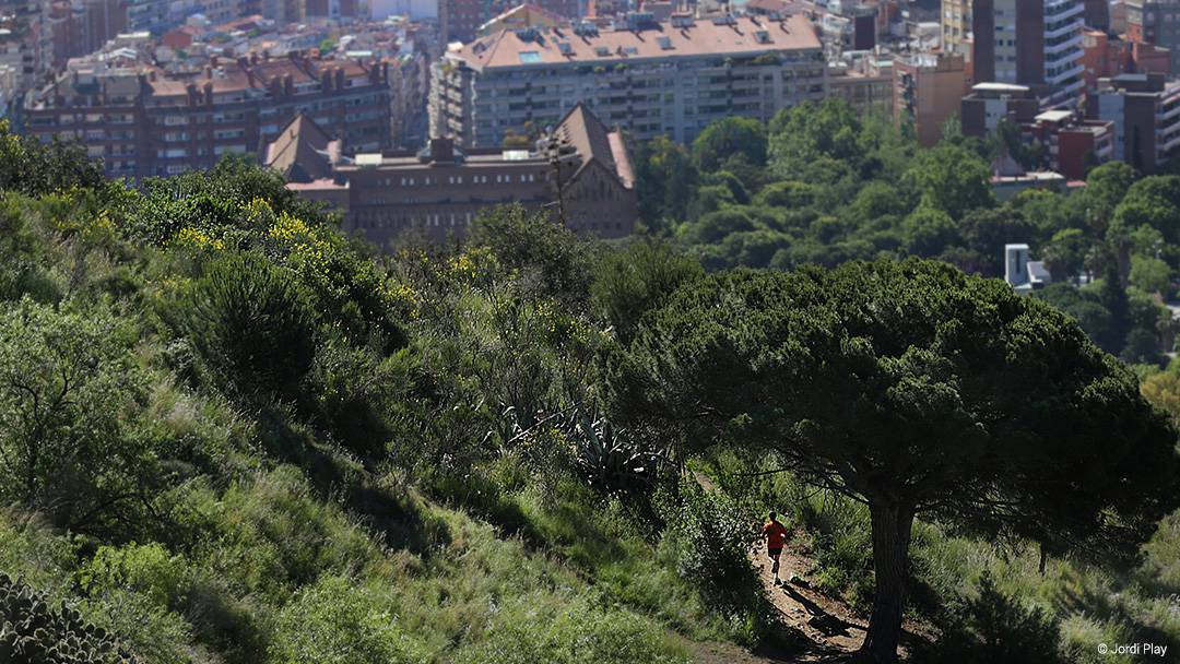 Parc de Collserola with Barcelona in the background