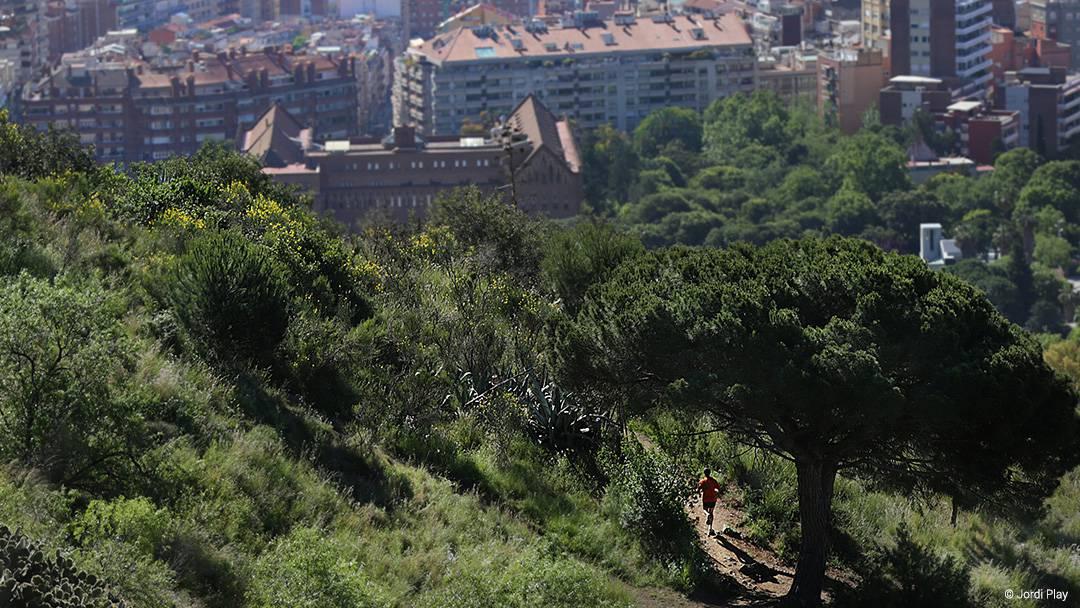 El parque de Collserola con Barcelona de fondo