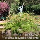 Estanque en los jardines de Villa Amelia