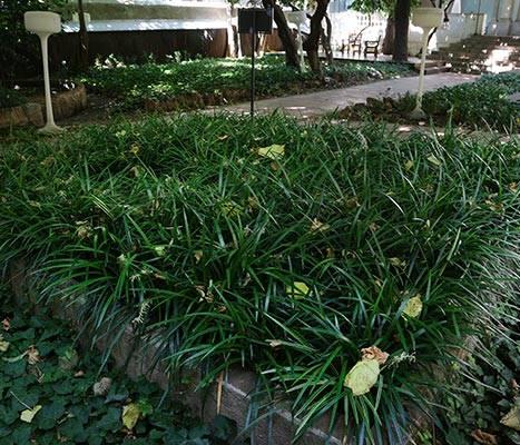 Detall dels jardins de la Casa Ignasi de Puig