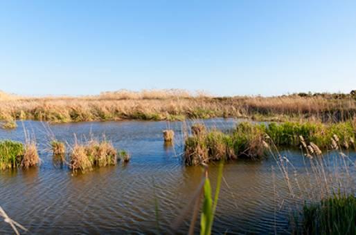 Delta del Llobbregat