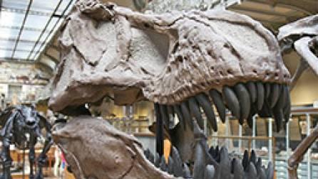 Ciencias sociales y humanidades – Arqueología clásica, paleoecología y patrimonio cultural